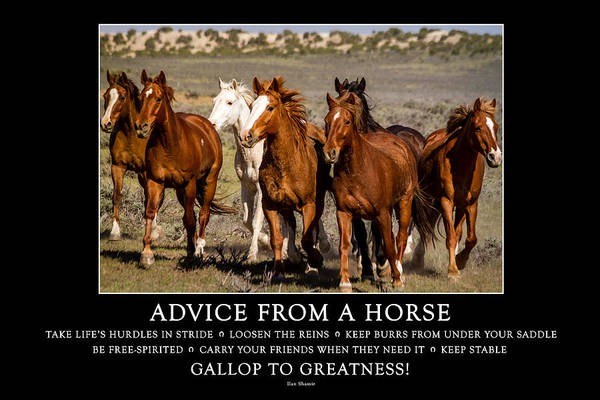 Photograph - Advice From A Horse by Teri Virbickis