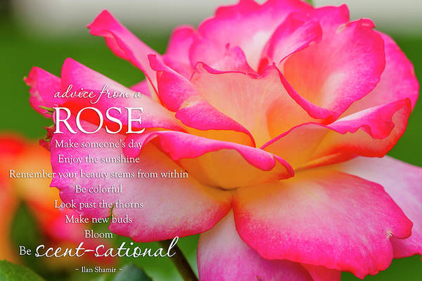 Photograph - Advice From A Rose by Teri Virbickis