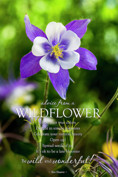 Photograph - Advice From A Wildflower Columbine by Teri Virbickis