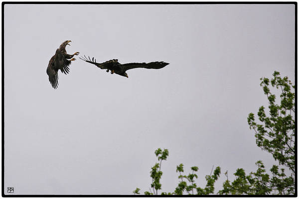 Photograph - Aerial Combat by John Meader