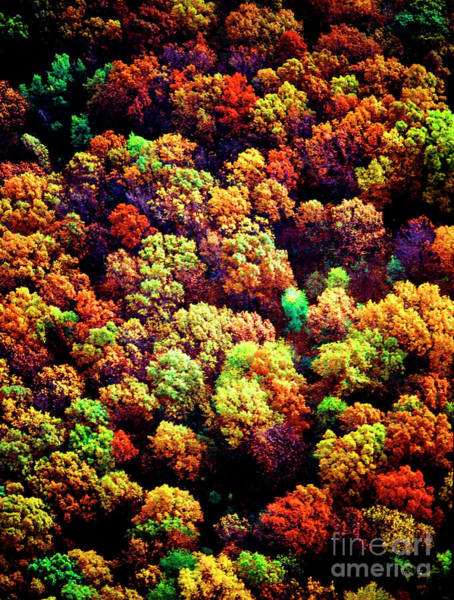 Photograph - Aerial Farm Tree Tops Fall Ff by Tom Jelen