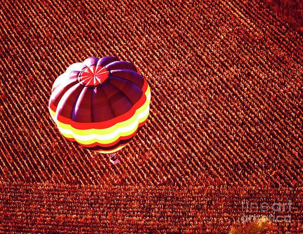 Photograph - Aerial, Hot, Air, Balloon,corn, Field,fall Colors  by Tom Jelen