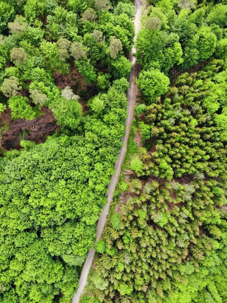 Photograph - Aerial View Green Trees In German Forest by Matthias Hauser
