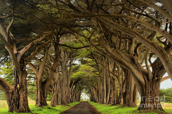 Photograph - Afernoon At The Cypress Tunnel by Adam Jewell