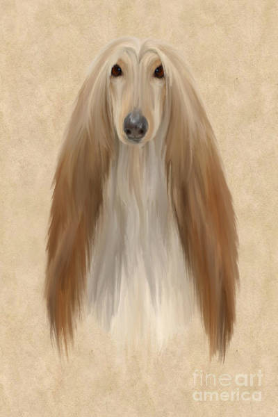 Furry Digital Art - Afghan Hound by John Edwards