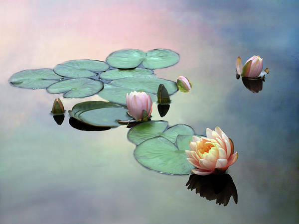Lotus Pond Photograph - Afloat by Jessica Jenney