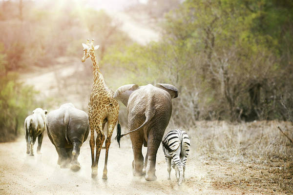 Photograph - Africa Safari Animals Walking Down Path by Susan Schmitz