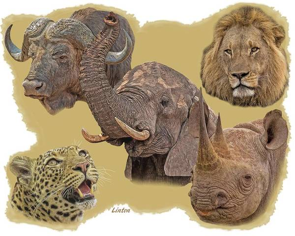 Photograph - African Big Five by Larry Linton