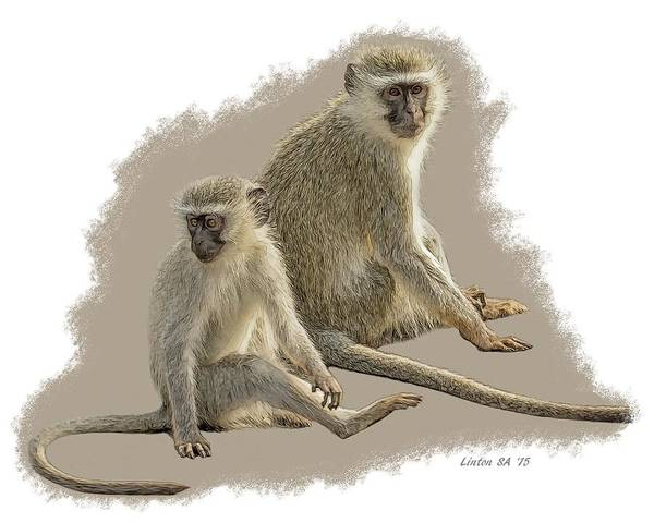 Digital Art - African Black-faced Vervet Monkeys by Larry Linton