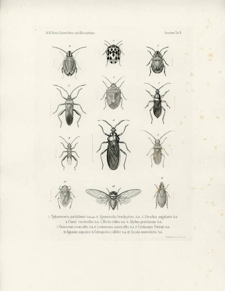 Art Print featuring the drawing African Bugs And Insects by W Wagenschieber
