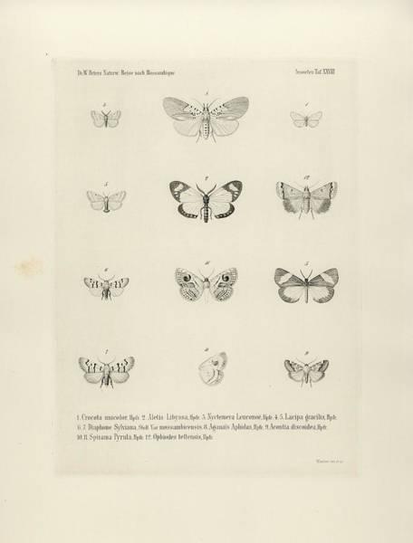 Drawing - African Butterflies by Bernhard Wienker