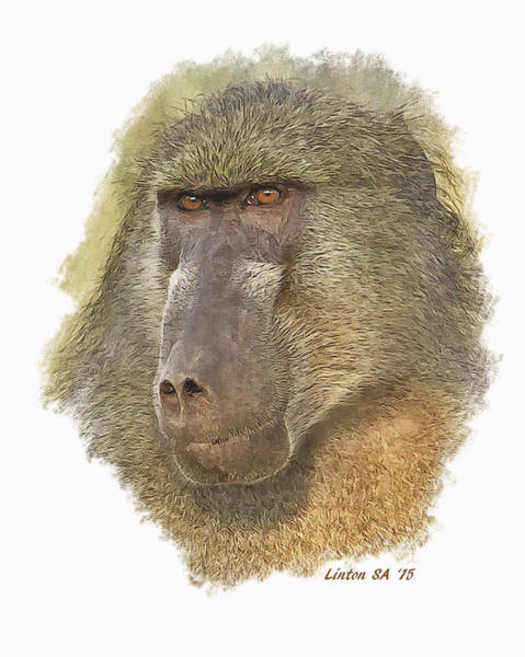 Digital Art - African Chacma Baboon by Larry Linton