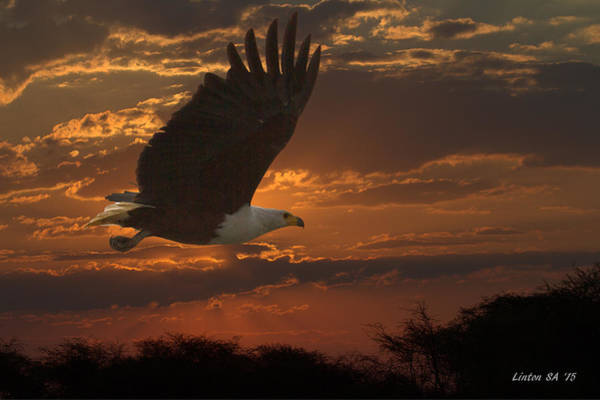 Photograph - African Fish Eagle At Sunset  by Larry Linton