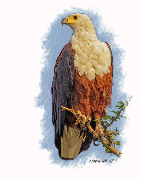 Digital Art - African Fish Eagle by Larry Linton