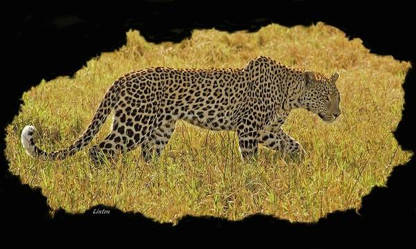 Digital Art - African Leopard 7 by Larry Linton