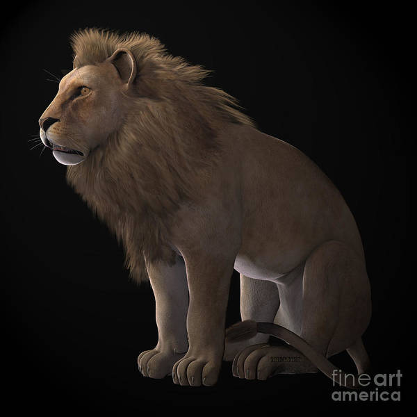 Wall Art - Painting - African Lion On Black by Corey Ford