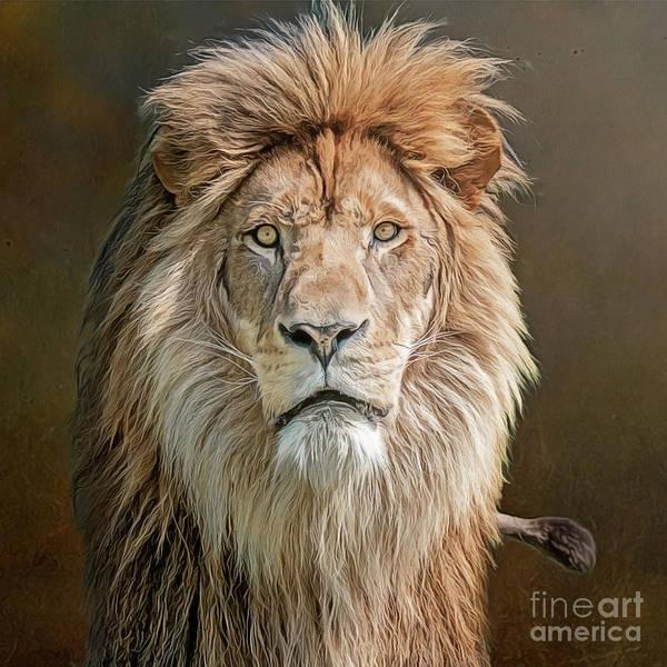 Photograph - African Lion Portrait by Brian Tarr