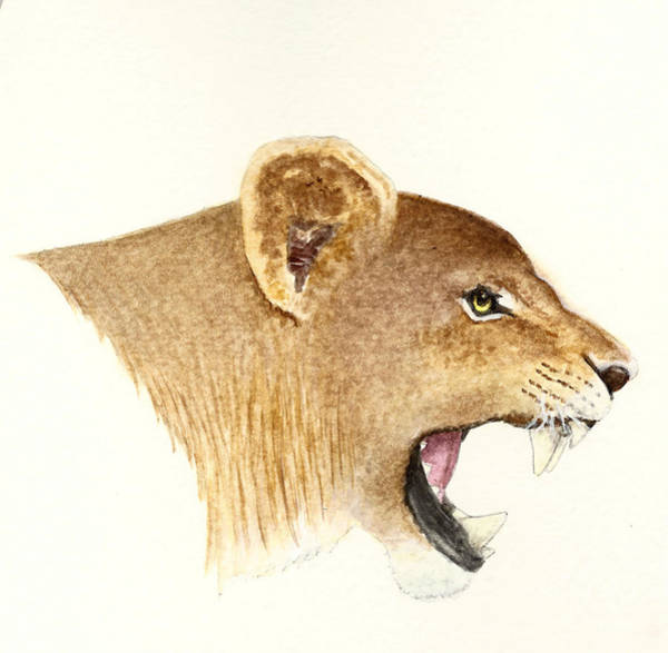 Wall Art - Painting - African Lioness by Michael Vigliotti
