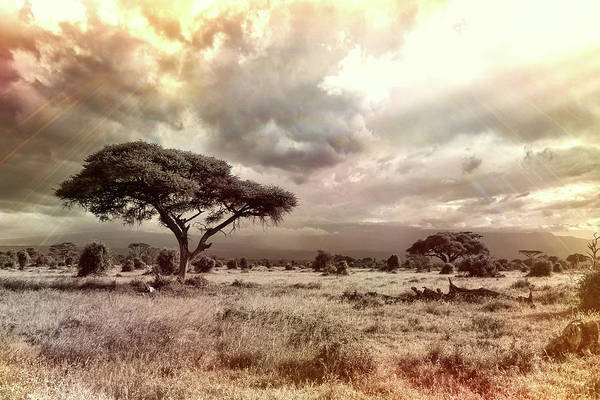 Photograph - African Plains by Movie Poster Prints