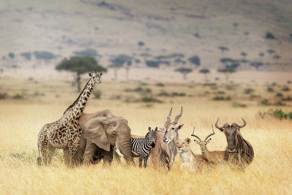 Wall Art - Photograph - African Safari Animals In Dreamy Kenya Scene by Susan Schmitz