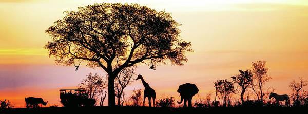 African Elephant Photograph - African Safari Silhouette Banner by Susan Schmitz
