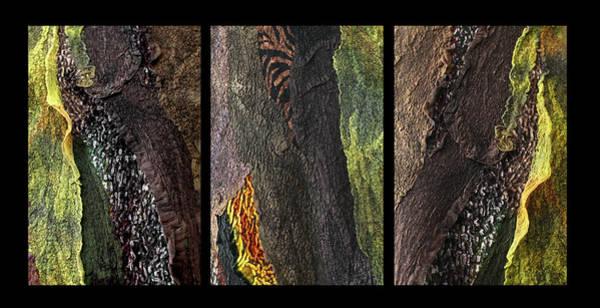 Photograph - African Safari Triptych by Marina Schkolnik