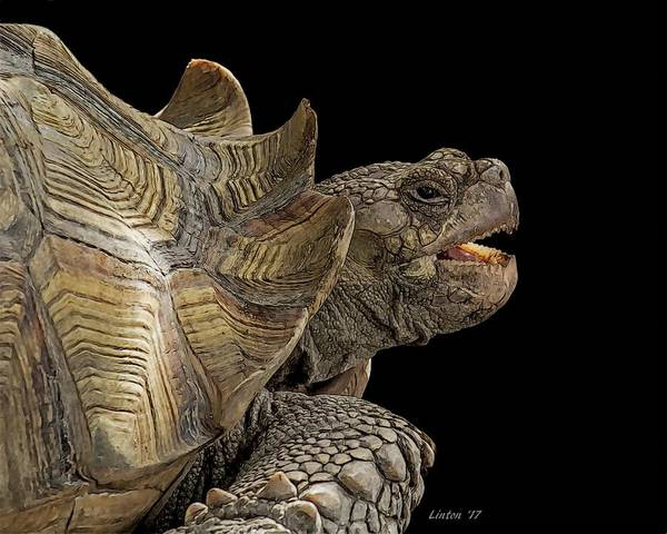 Digital Art - African Spurred Tortoise by Larry Linton