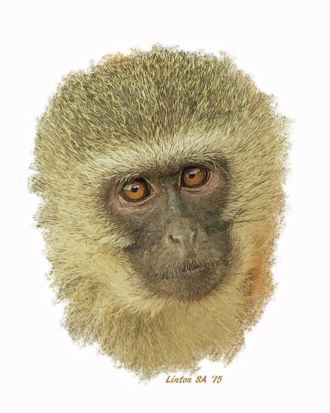 Digital Art - African Vervet Monkey 2 by Larry Linton