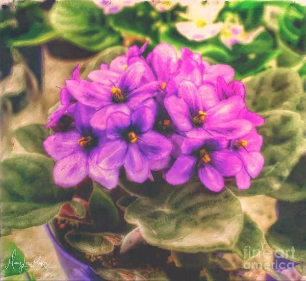 Digital Art -   African Violets  by MaryLee Parker