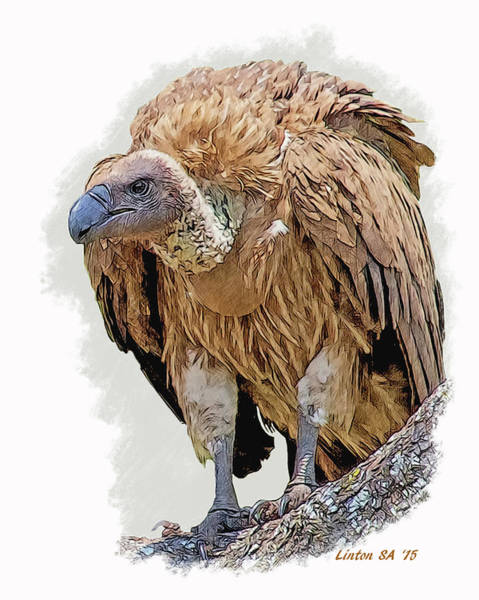 Digital Art - African White-backed Vulture by Larry Linton