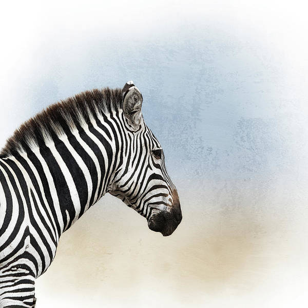 Wall Art - Photograph - African Zebra Closeup Square by Susan Schmitz
