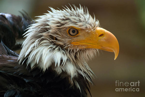 Photograph - After A Bath by Eyeshine Photography
