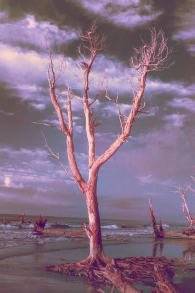 Wildlife Refuge Digital Art - After Apocalypse by Jim Cook