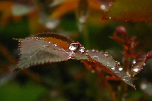 Wall Art - Photograph - After Rain by Eye Contact