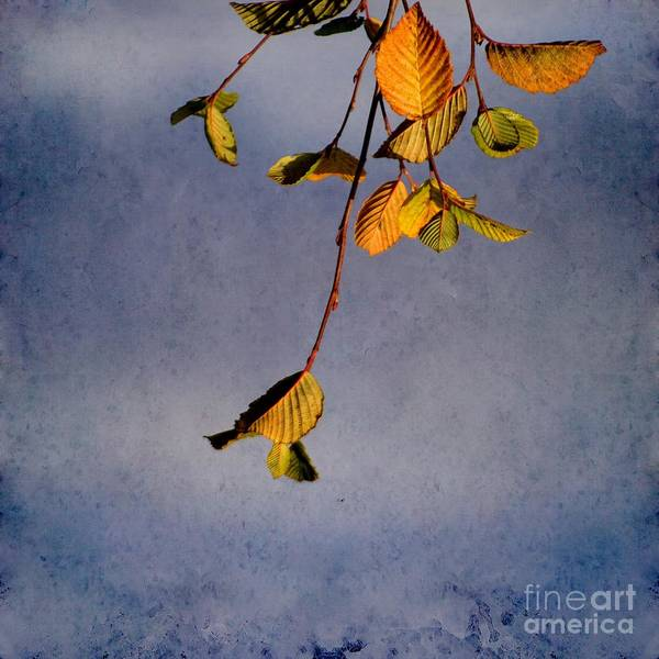 Wall Art - Photograph - After Summer Leaves by Aimelle