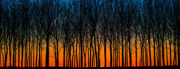 Photograph - After Sunset In The Walnut Grove by Michael Arend