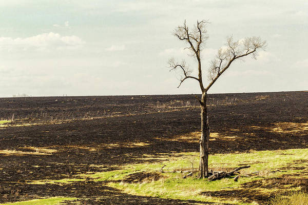 Photograph - After The Fire by Pete Hendley
