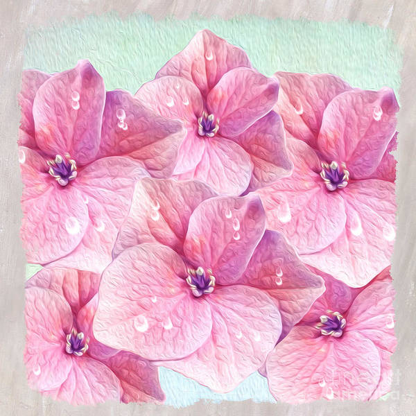 Hydrangea Photograph - After The Rain by Laura D Young