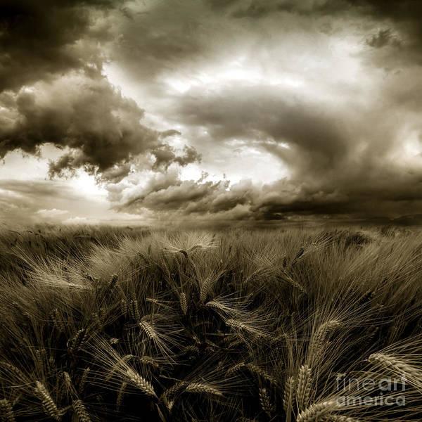 Cornfield Photograph - After The Storm  by Franziskus Pfleghart