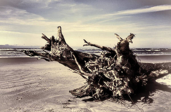 Photograph - After The Storm  by HW Kateley