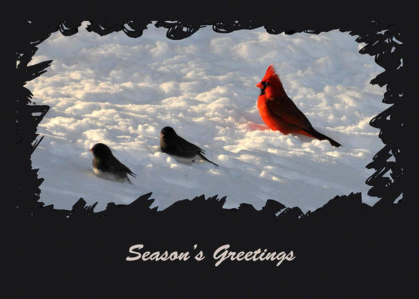 Photograph - After The Storm - Season's Greetings by Gerlinde Keating - Galleria GK Keating Associates Inc