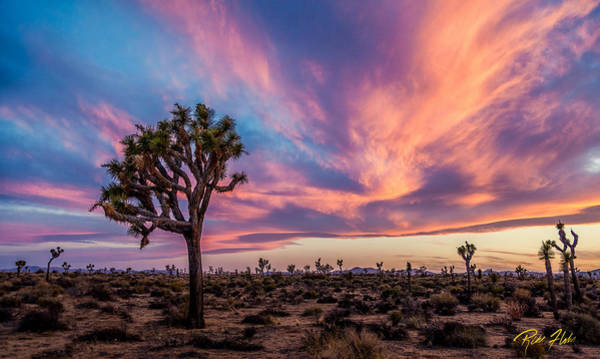 Photograph - Afterglow At Joshua Tree by Rikk Flohr