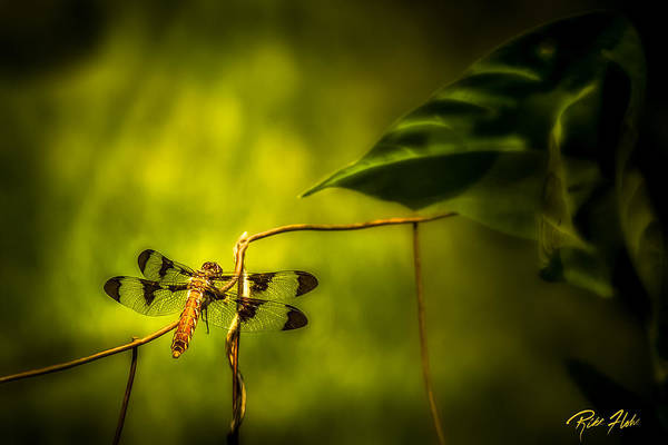 Photograph - Afternoon Dragonfly by Rikk Flohr