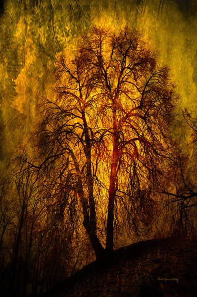 Photograph - Afternoon Gold by Randi Grace Nilsberg
