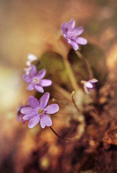Liverwort Photograph - Afternoon Impression With Liverworts by Jaroslaw Blaminsky