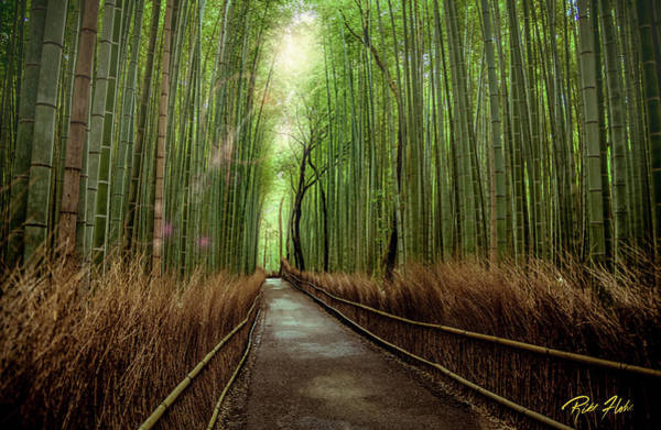 Photograph - Afternoon In The Bamboo by Rikk Flohr