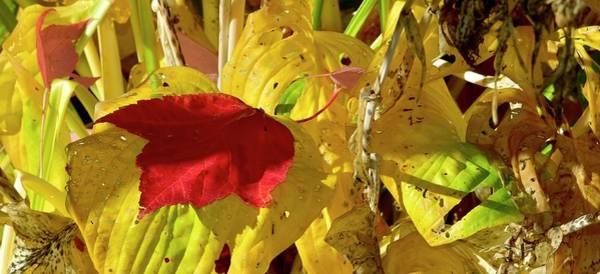 Photograph - Afternoon Leaf by Jerry Sodorff