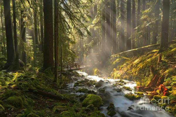 Photograph - Afternoon Light Beams by Adam Jewell