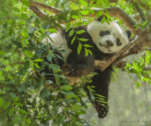 Afternoon Nap Baby Panda Art Print