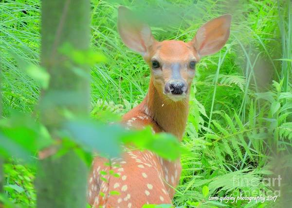 Aurore Photograph - Afternoon Of A Fawn  by Tami Quigley